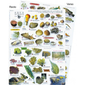Guide des especes du littoral de l'Atlantique et de la Manche
